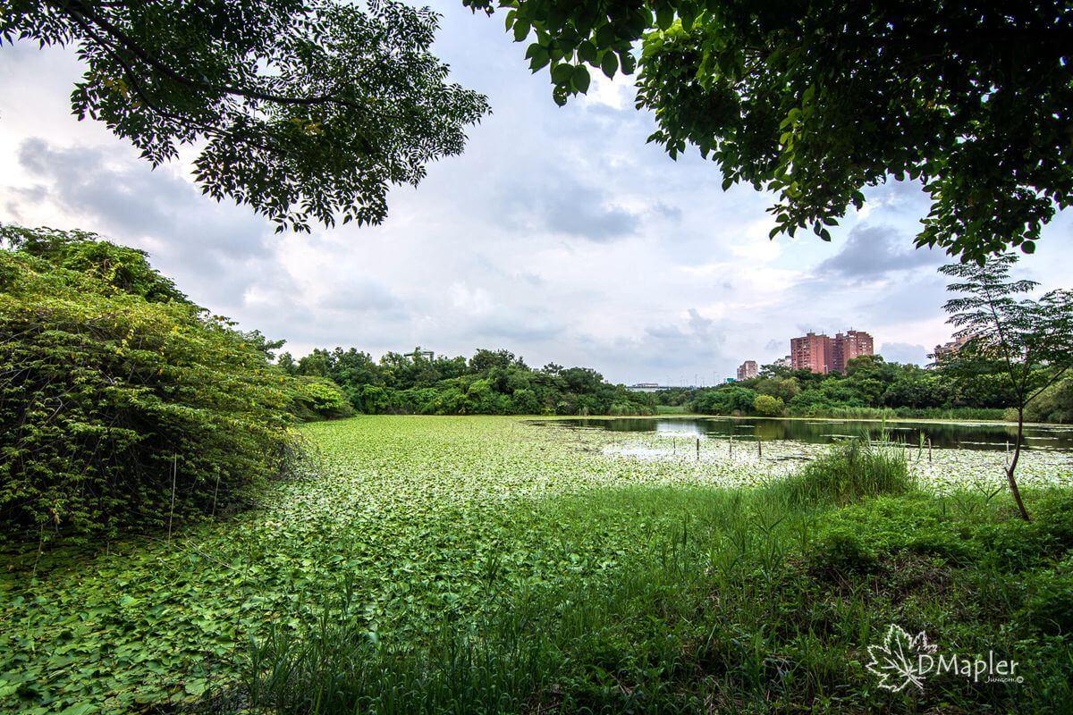 高雄左營|洲仔濕地生態解說中心